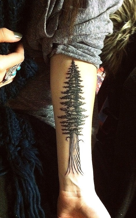 redwood tree tattoos